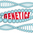 Genetics - Word in DNA - Stock Photo