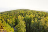 Panoramic view of mountain forest — Stock Photo
