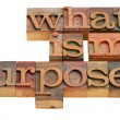 What is my purpose - Stock Photo