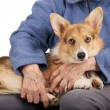 Old hands and young puppy — Stock Photo