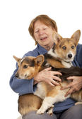 Senior lady with her Corgi puppies — Stock Photo