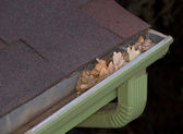 Gutter blocked by dry leaves — Stock Photo