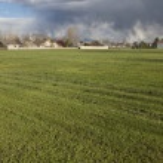 Grass field freshly mowed — Stock Photo #4577330