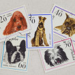 Stock Photo: Dogs on vintage post stamps from Poland