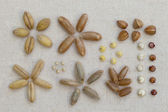 Variety of cereal grain on canvas — Stock Photo