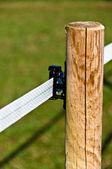 Zelektryfikowanych ogrodzenia dla zwierząt gospodarskich — Zdjęcie stockowe