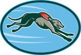 собачьи гонки и прыжки установить внутри овал — Стоковое фото