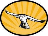 下に急降下オオタカ鳥 — ストック写真