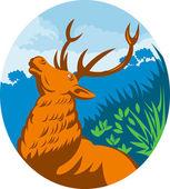 Rugindo vermelhos veados veados com floresta — Foto Stock