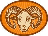大角羊或 ram — 图库照片