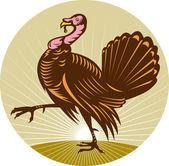 Wild turkey walking side view — Stock Photo