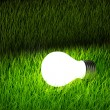 Light bulb over green grass — Stock Photo