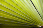Closeup of green palm frond radiating out diagonally — Stock Photo