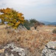 Autumn plateau with yellow tree and grass in Crimea mountains. — Stock Photo