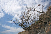 Dry bush on mountain slope against a blue sky with clouds — ストック写真