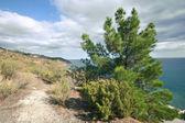 Road to sea among trees and bushes. Crimea mountains. — Stock Photo