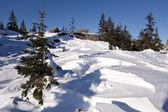 Winter snowy landscape.Wild nature in Russia.Taiga — Stock Photo