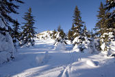 Tranquil winter landscape.Ski tracks, snow. Russia — Stock Photo