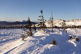 Zimní zasněžené landscape.wild příroda v russia.taiga — Stock fotografie