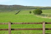 Yorkshire Dales farmland — Stock Photo