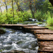 Stock Photo: Forest Stream Scenery