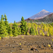 Tenerife Landscape — Stock Photo