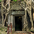 Ta Prohm Temple in Cambodia - Stock Photo