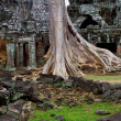 Ta Prohm Temple Ruins — Stock Photo