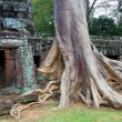 Ta Prohm Temple in Cambodia — Stock Photo