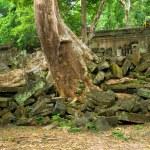 Scenic Temple Ruins in the Jungle — Stock Photo #5167756
