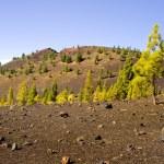 Teide National Park in Tenerife — Stock Photo #5222697