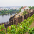 Vineyard in Prague — Stock Photo