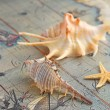 Stock Photo: Marine shells on old-time map