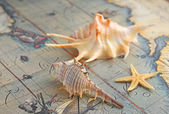 Marine shells on an old-time map — Stock Photo