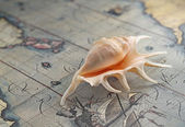 Marine shell on an old-time map — Stock Photo