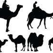 Royalty-Free Stock Imagen vectorial: Camels collection - vector