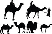 Camels collection - vector — Stok Vektör