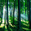 Sunshine in the green forest — Stock Photo #4673144