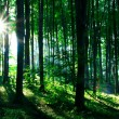 Sunshine in the green forest — Stock Photo #4673167