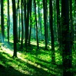 Foto Stock: Sunshine in green forest