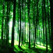Sunshine in the green forest — Stock Photo