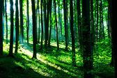 Zon in het groene bos — Stockfoto