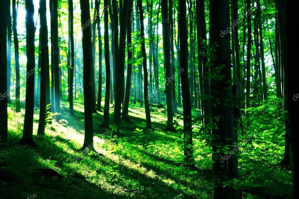 Фотообои Солнечный свет в зеленый лес