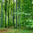Green forest — Stock Photo #5213457