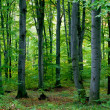 Green forest — Stock Photo #5213544