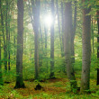 Foto Stock: Green forest