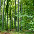 Green forest — Stock Photo #5213630