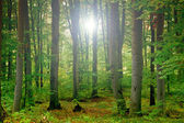 Green forest — Foto Stock