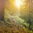 Mystic forest — Stock Photo #5358849