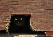 Gatto nascosto in un fienile. — Foto Stock